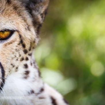 Safari afrique du sud Kruger isi mangaliso addo éléphant lion parc guépard gnou